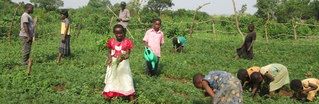 Pupils implementing the Pupil Managed School Farm