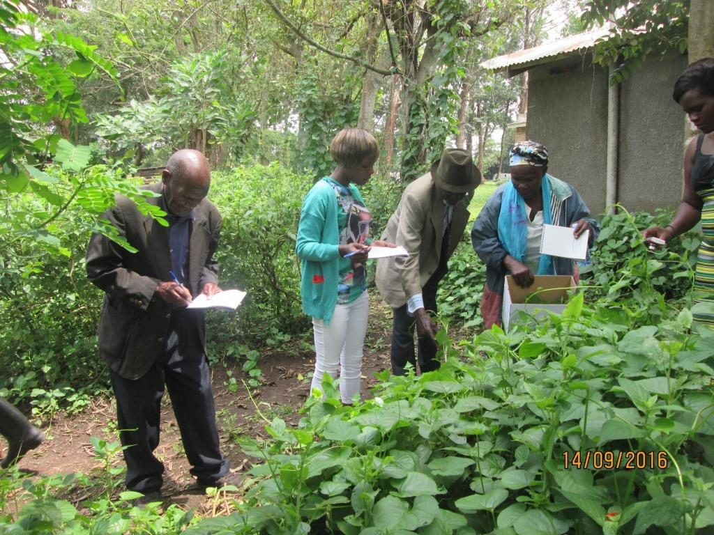 Traditional Wisdom Specialists identifying different herbal medicinal plants and explaining the different diseases they cure