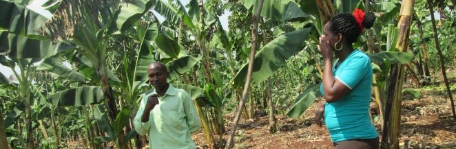 ARU Interns Engage in Monitoring and Mentoring of Organic Farmers